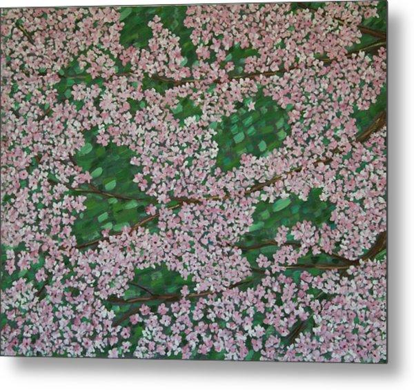 Cherry Blossoms Metal Print by Karen Alonge