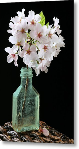 Cherry Green Metal Print by JC Findley