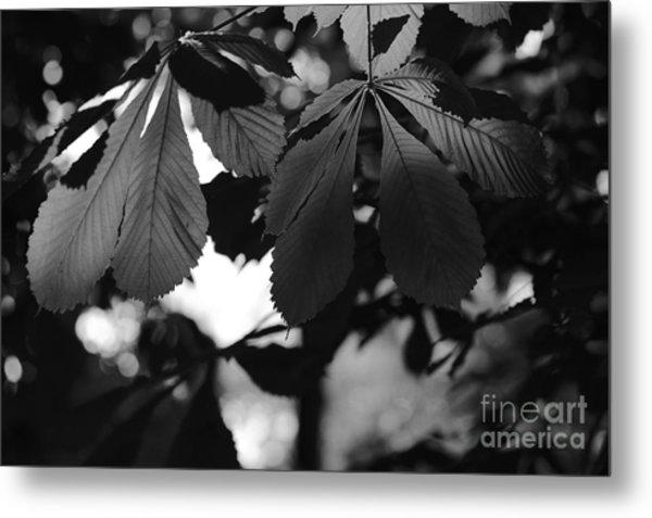 Chestnut Leaves Metal Print