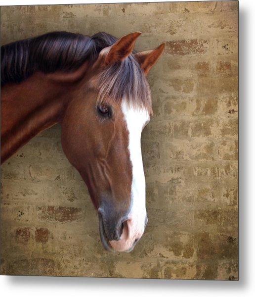 Chestnut Pony Portrait Metal Print