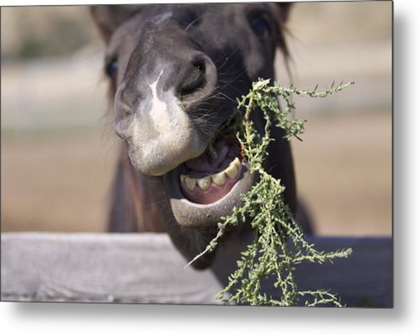 Chew On This Metal Print