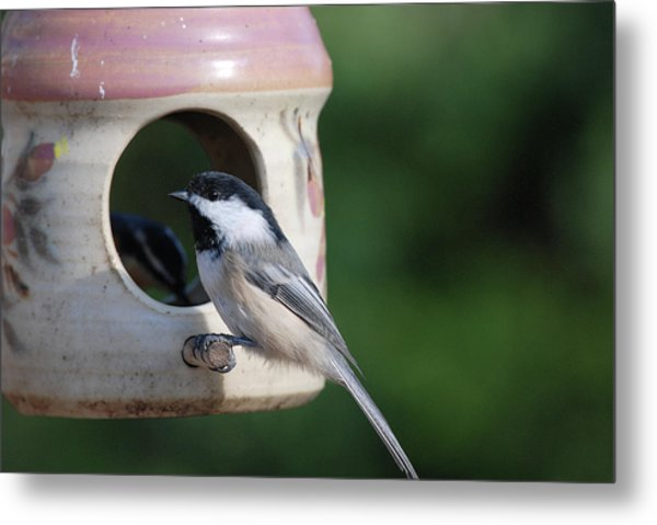 Chickadee Posing At Feeder Metal Print