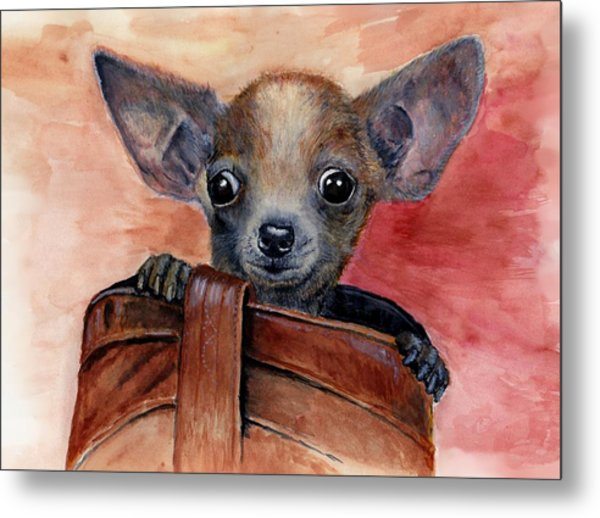 Chihuahua Puppy Metal Print by Katerina A Cechova