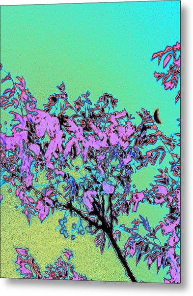 Chinaberry Moon Metal Print