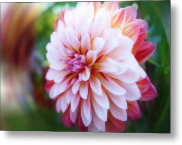 Chrysanthemum Revelation Metal Print