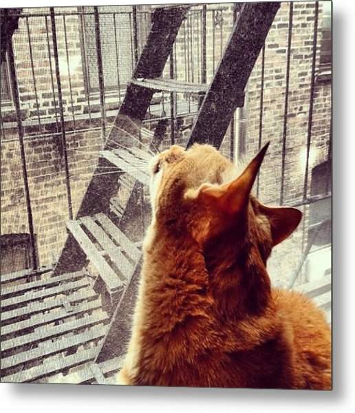 City Cat And Fire Escapes Metal Print