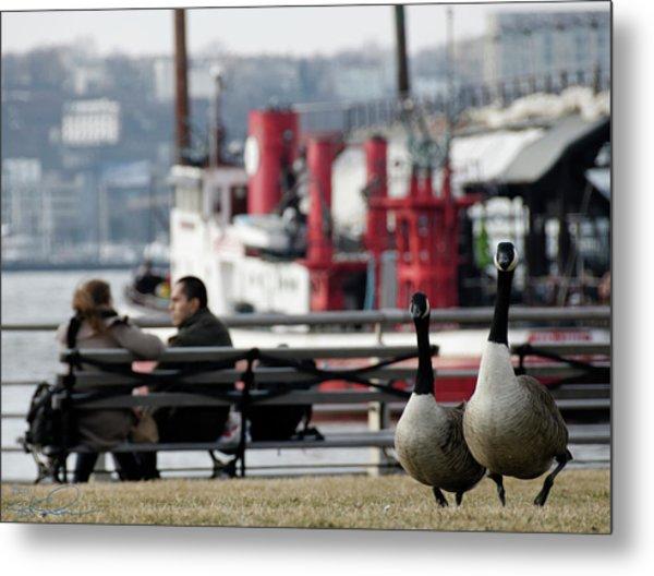 City Geese Metal Print