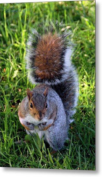 City Squirrel Metal Print