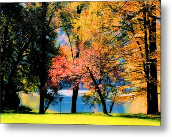 Clear Creek Autumn Metal Print by Darlene Bell