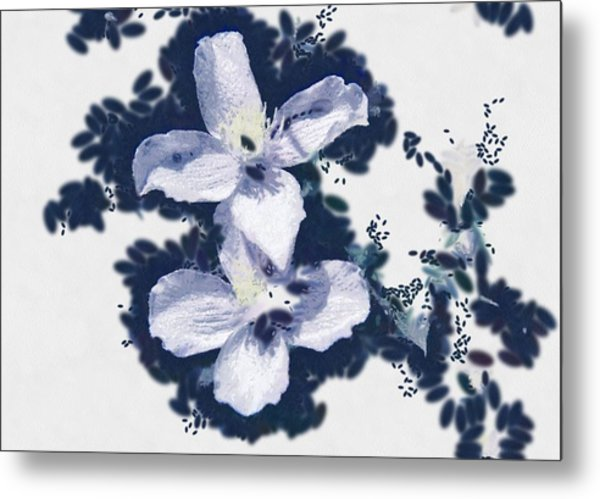 Clematis In Blue Metal Print