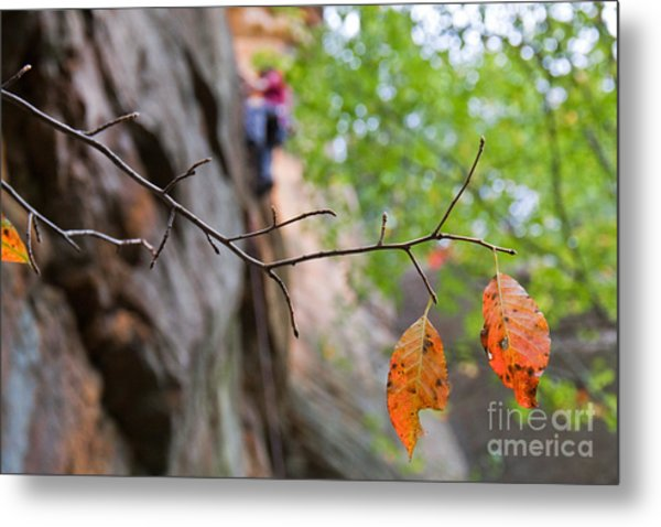 Climber In Fall Metal Print