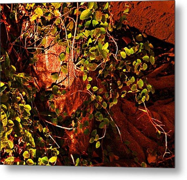 Climbing Magic Plant Metal Print by Susana Sanchez Giraud