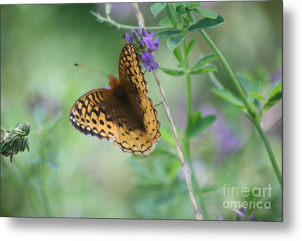 Close-up Butterfly Metal Print