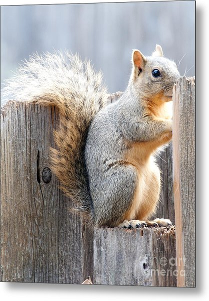 Checking If The Yard Clear For Dinner Metal Print