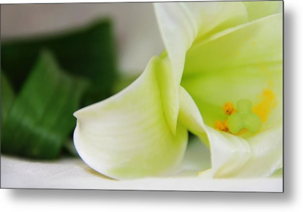 Close-up On White Lilies Metal Print by Gal Ashkenazi