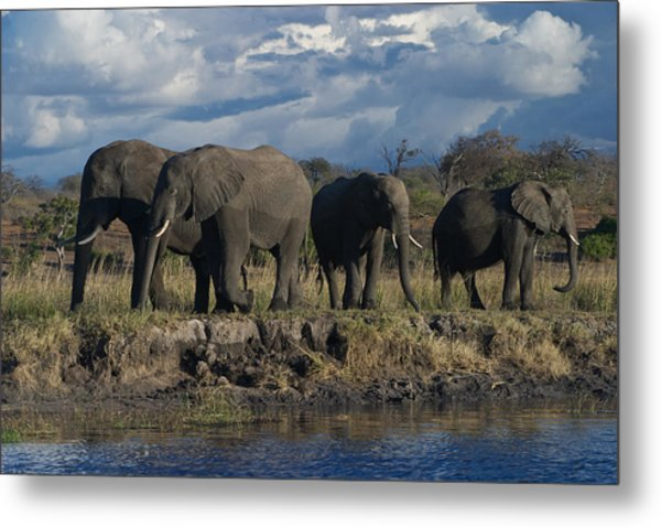 Clouds And Elephants Metal Print
