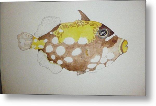 Clown Triggerfish Metal Print by Tim Forrester