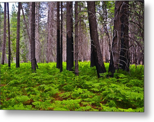 Cluster Of Ferns Metal Print by Camille Lyver