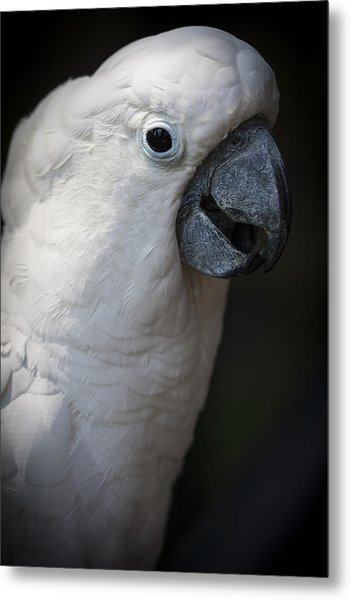Cockatoo Metal Print