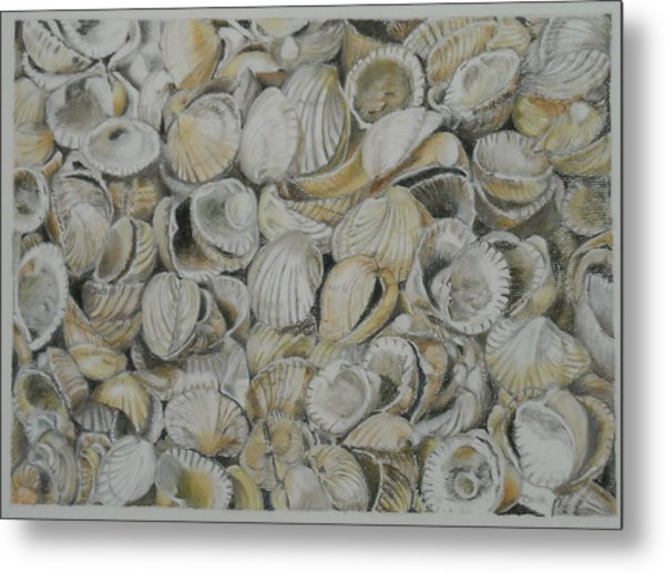Cockle Shells Metal Print
