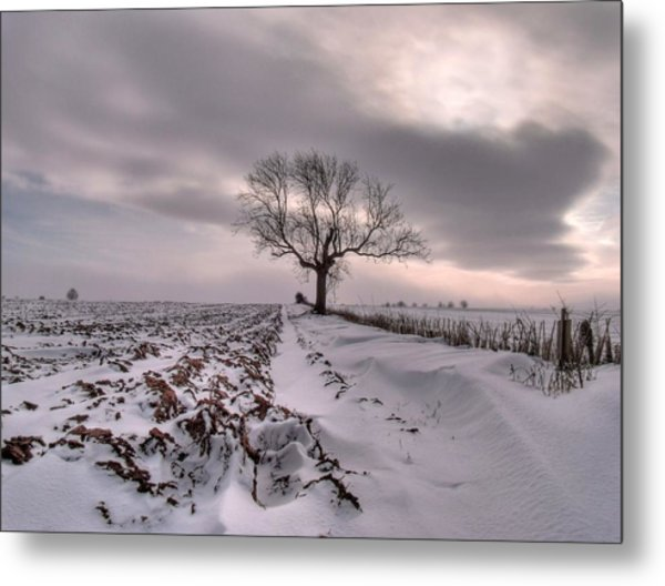Cold And Lonely Metal Print