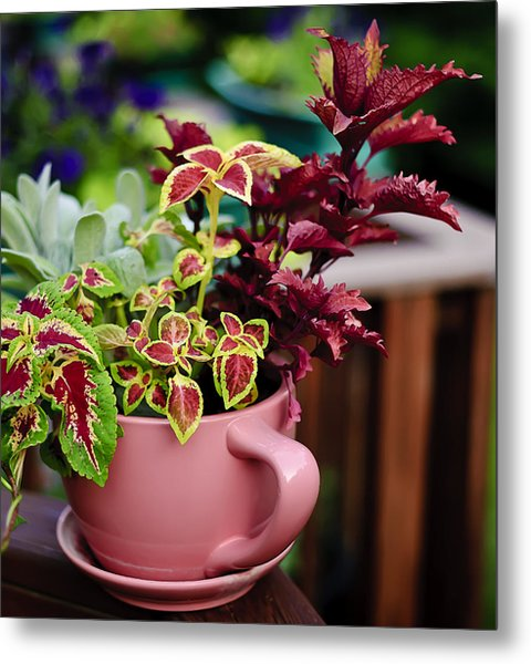 Coleus Collection Metal Print by Michael Putnam