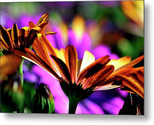Color And Light Metal Print