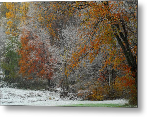 Color Caught In The Snow Metal Print