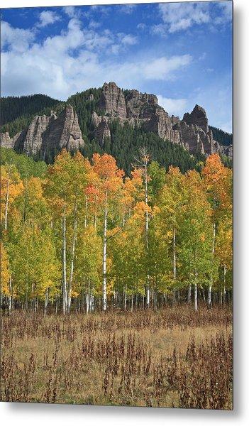 Colorado Aspens In Fall Metal Print