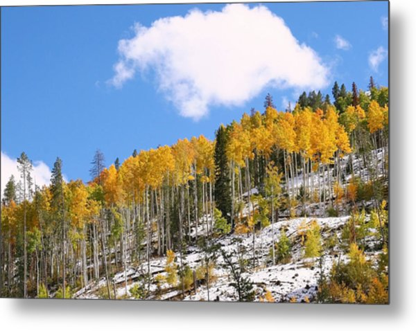 Colorado Autumn Metal Print by Sharon I Williams