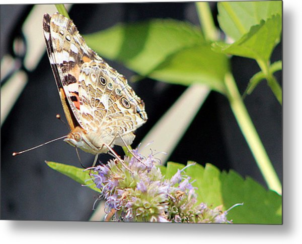 Colorful Critter 1 Metal Print by Frank Nicolato