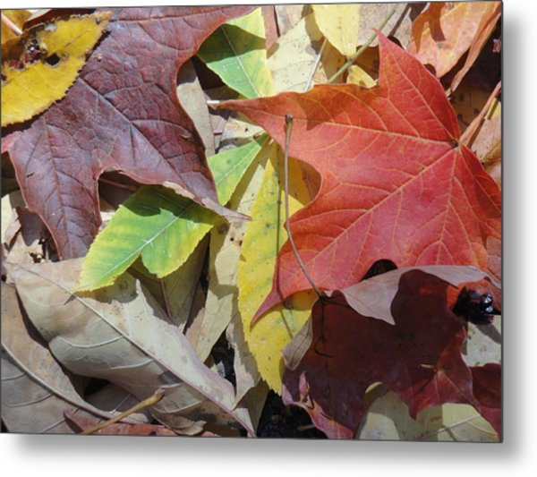 Colorful Fall Leaves Metal Print by Kathy Lyon-Smith