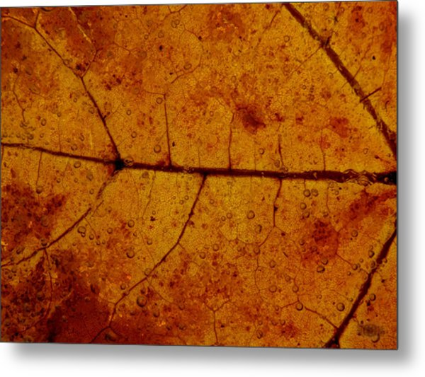 Metal Print featuring the photograph Colors Of Nature 4 by Sami Tiainen
