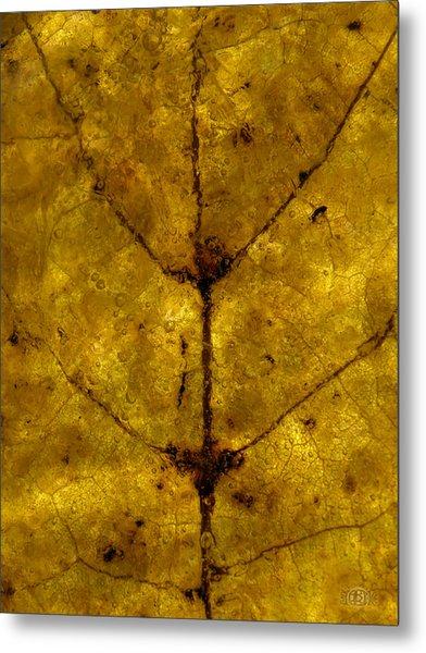 Colors Of Nature 5 Metal Print