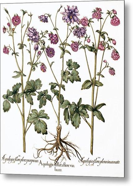 Columbine Flowers Metal Print by Georgette Douwma