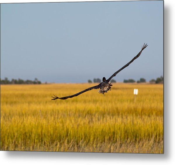 Metal Print featuring the photograph Come Fly With Me by Francis Trudeau