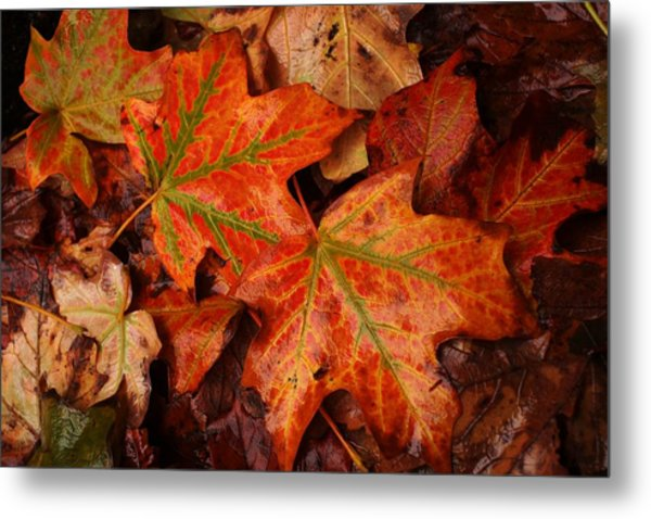 Complementary Contrast Leaves Metal Print by Matthew Green