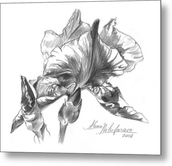 Conte Pencil Sketch Of Iris Metal Print