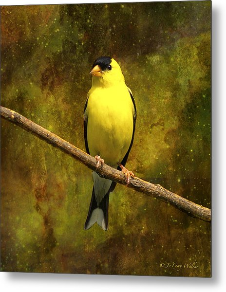 Contemplating Goldfinch Metal Print