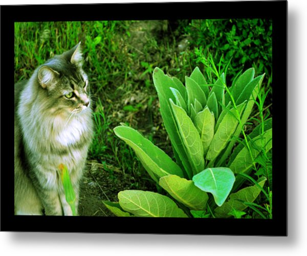 Contemplating The Nature Of Mullein Metal Print