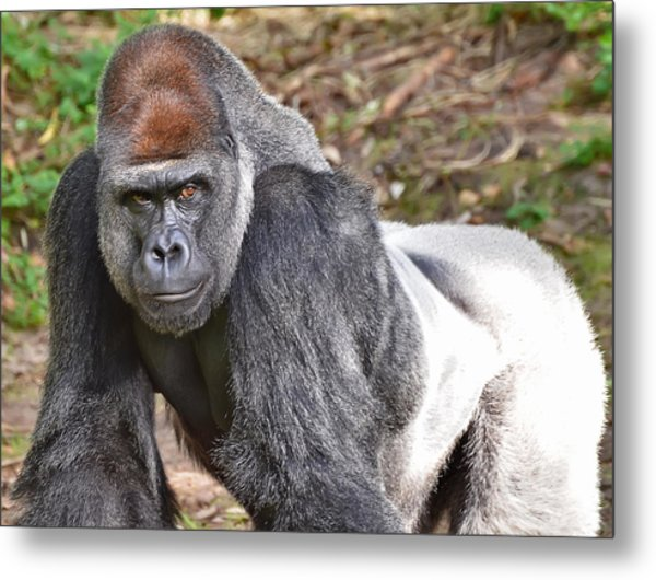 Contemplation Metal Print by Mark Walter