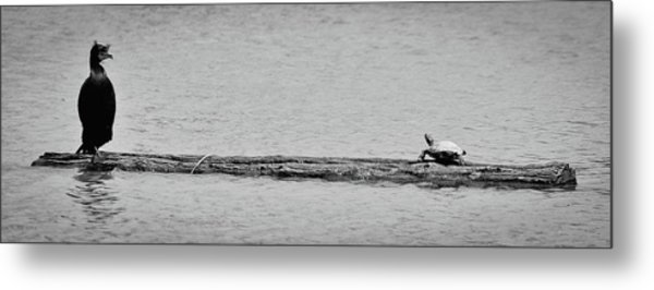 Cormorant And Turtle Metal Print