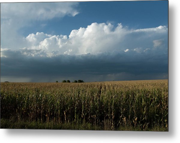 Corn Country Metal Print