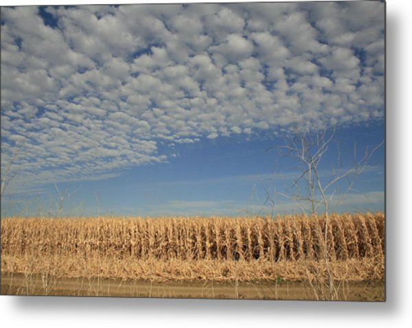 Corn Fields In West Metal Print