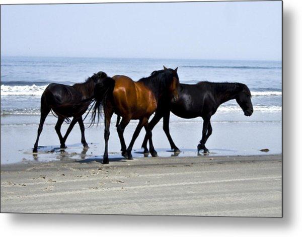 Corolla Beach Horses Metal Print