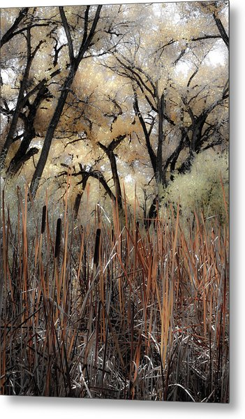 Cottonwoods And Cat Tails Metal Print by Denice Breaux