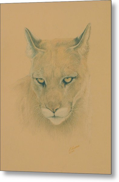 Cougar Metal Print by Norm Holmberg
