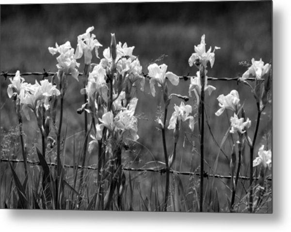 Country Flowers Metal Print