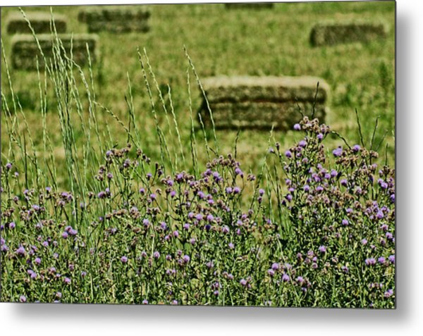 Country Gardens Metal Print