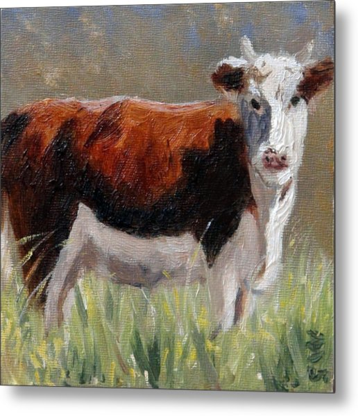 Cow In The Meadow Metal Print